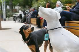 perro mira a un perro estatua barcelona