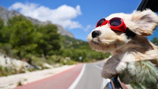 perro feliz en la ventana de un auto