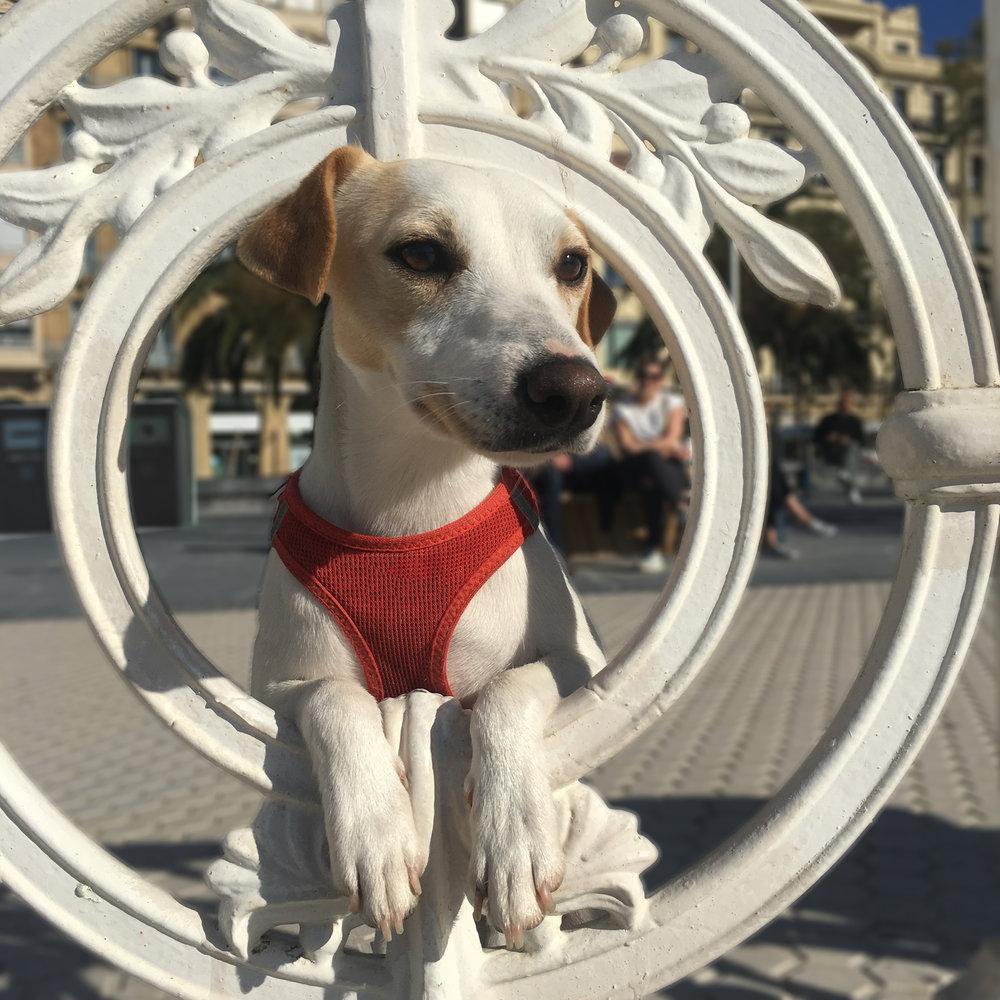 viajar con perros a valencia