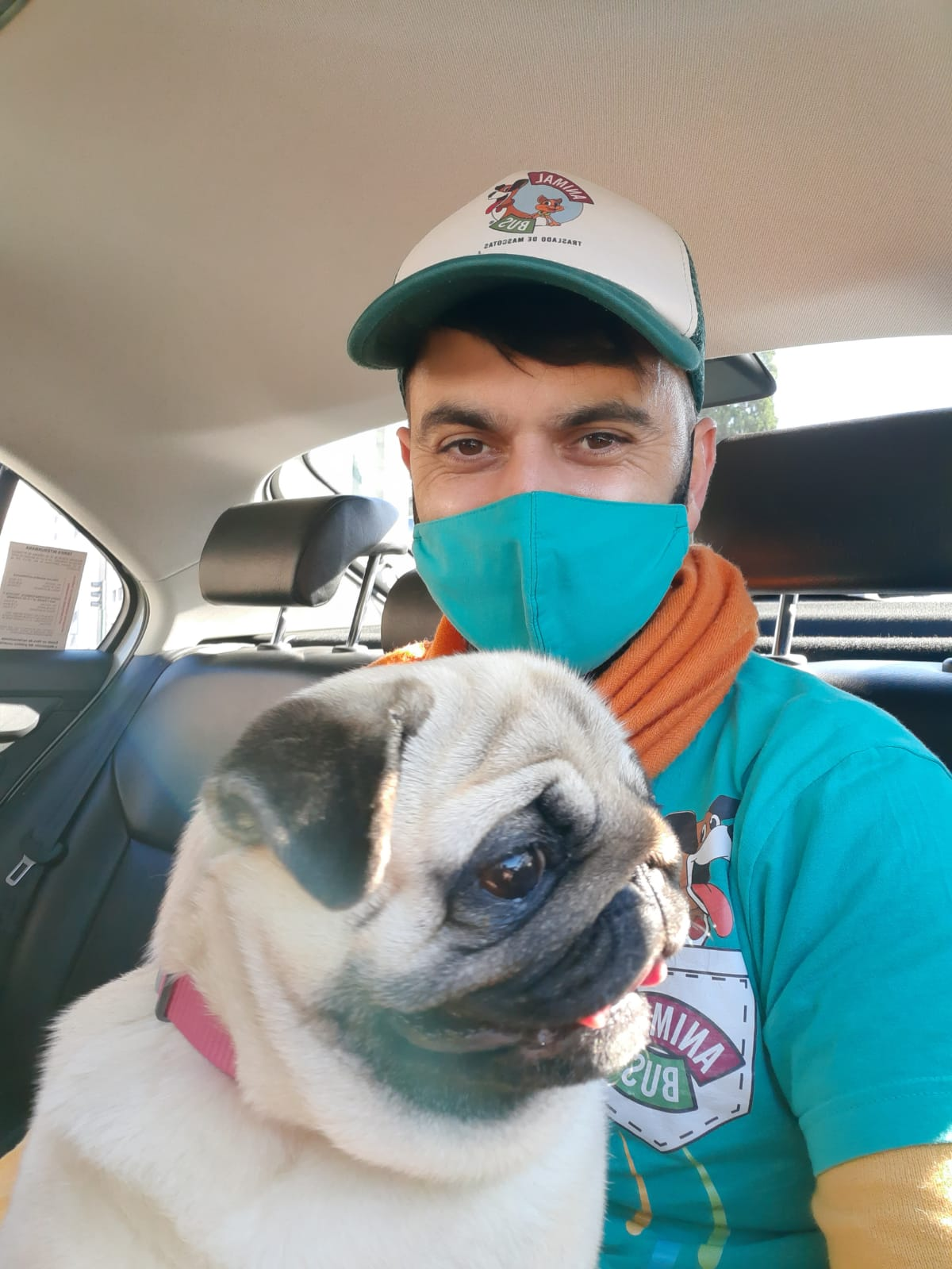cachorro perro viajando en un auto